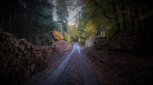wood road autumn