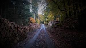 wood road autumn