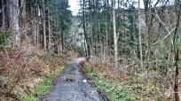 Road near Wigny, Ardennes