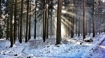 Winter forest, Germany
